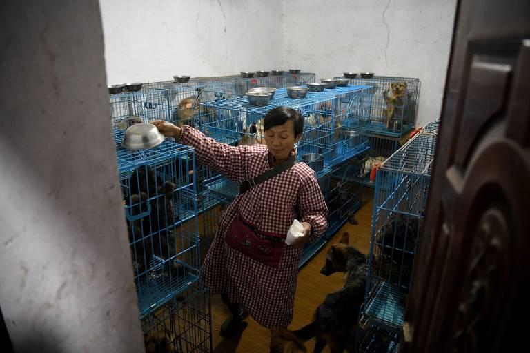 Aposentada abriga 1.300 cães