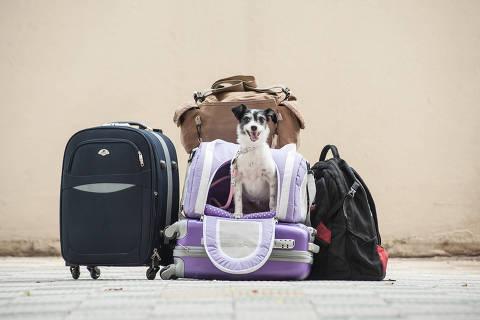 SÃO PAULO, SP, BRASIL, 14-10-2014: A cachorra Lucy, dentro de caixa de transporte flexível usada em viagens de avião, em São Paulo (SP). Pets pagam preço de passagem de adultos em viagens aéreas e precisam passar pelo veterinário antes de serem transportados; opção de ir na cabine é restrita pelo peso. Com exceção do cão-guia, que pode viajar com o passageiro gratuitamente, cada empresa define suas regras para o transporte de animais. Não há uma regulamentação padronizada pela Anac (Agência Nacional de Aviação Civil).  (Foto: Gustavo Epifanio/Foilhapress)