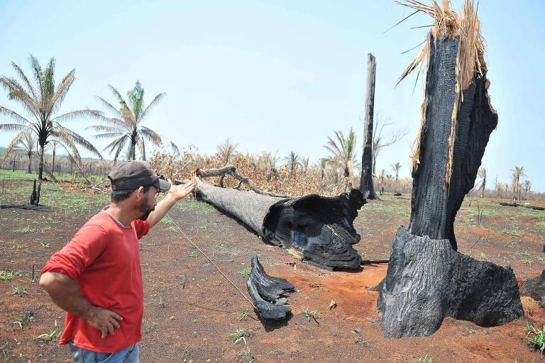 Morador diante de um tronco de árvore queimado e cortado