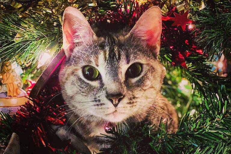 Gatos brincam com enfeites e árvores de Natal