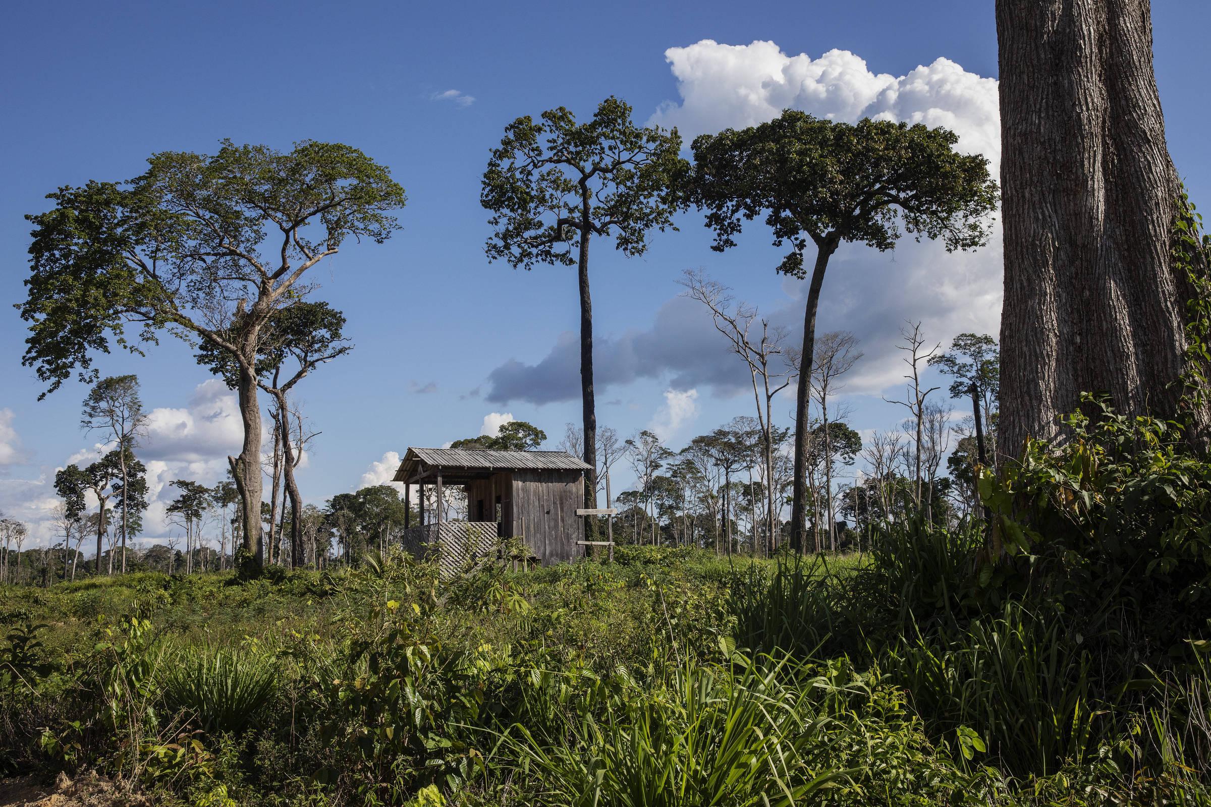 Área desmatada ilegalmente no município de Uruará, localizada durante operação de combate ao desmatamento da Secretaria Estadual do Meio Ambiente do Pará