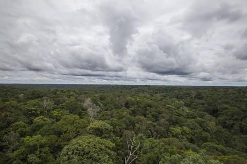 MANAUS, AM - 18.12.2017: MUSEU-AMAZONIA - Torre de observação do Museu da Amazônia, que possui 42 metros de altura, 81 metros quadrados de base e 242 degraus. O museu fica dentro da reserva florestal Adolfo Ducke, que por sua vez se estende por 100 km quadrados. Ambos estão localizados no extremo leste da cidade de Manaus. (Foto: Suamy Beydoun/Agif/Folhapress)