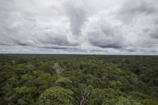 Torre do Museu da Amazônia