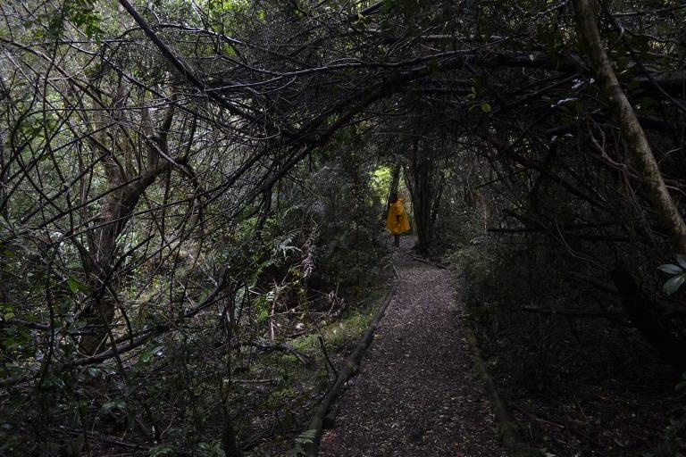 Túnel de plantas com pessoa ao fundo, usando capa de chuva
