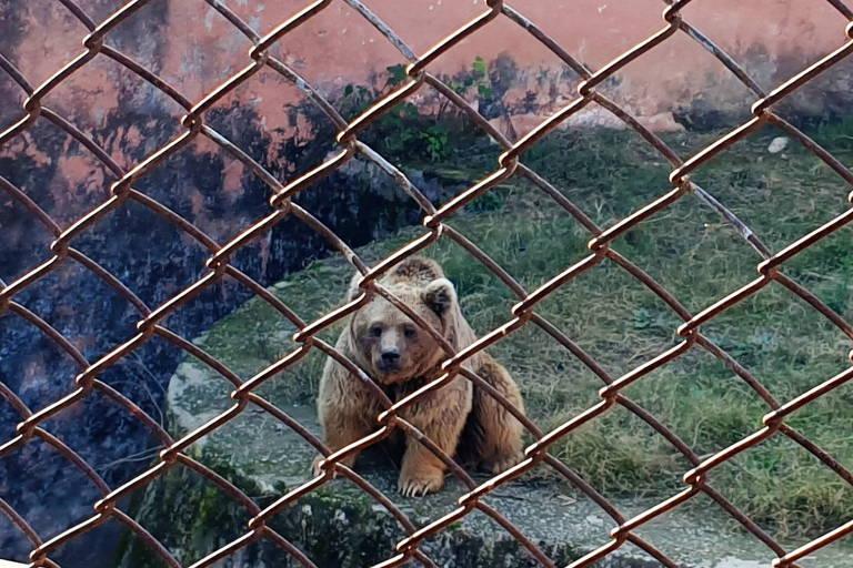 Um dos ursos de um zoológico em Islamabad, no Paquistão, antes de ser transportado para um santuário na Jordânia.