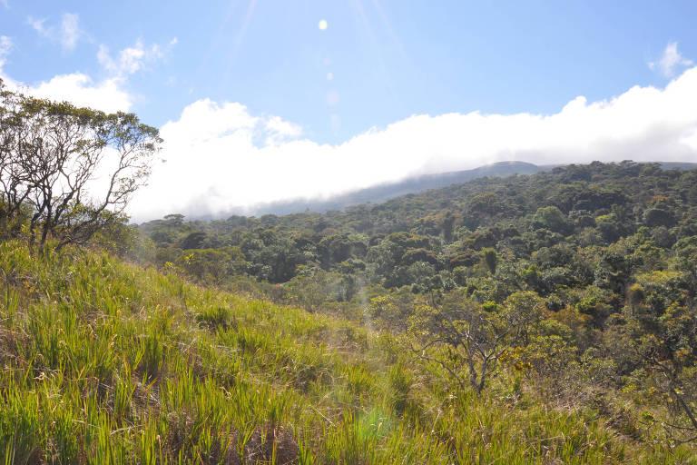 Floresta tropical no sudeste do Brasil; estudo mostra que florestas de MG estão liberando mais carbono do que absorvem
