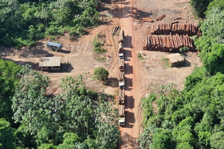 Toras de madeira nativa apreendidas durante a Operação Handroanthus GLO, da Polícia Federal, no oeste do Pará