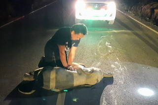 A rescue worker performs CPR on a baby elephant after a motorcycle crash in Chanthaburi province