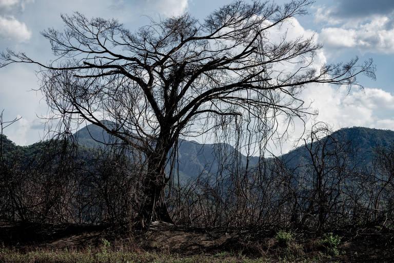 O Pantanal após os incêndios