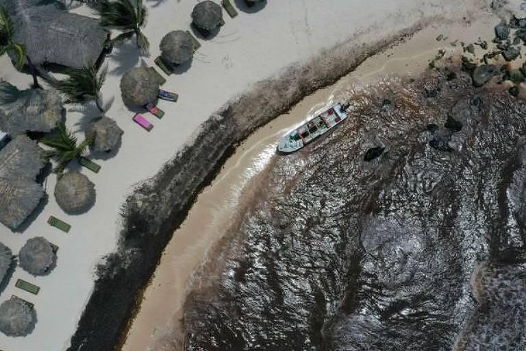 A costa de um resort no México escureceu com a acumulação das algas