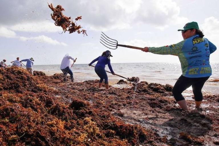 Moradores de cidades costeiras mexicanas enfrentam a difícil tarefa de tentar limpar os montes de sargaço manualmente