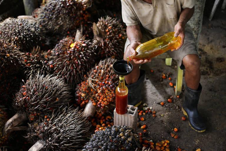 Homem derrama óleo de dendê em uma garrafa; em volta dele, cachos do fruto estão espalhadas pelo chão