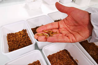 French start-up Ynsect plans to build world's biggest bug farm