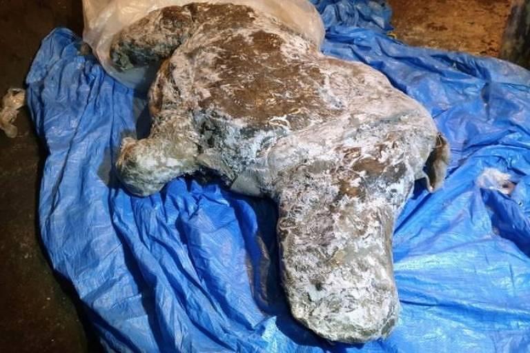 Carcaça foi encontrada por um morador nas margens de um rio no leste da Sibéria em agosto de 2020