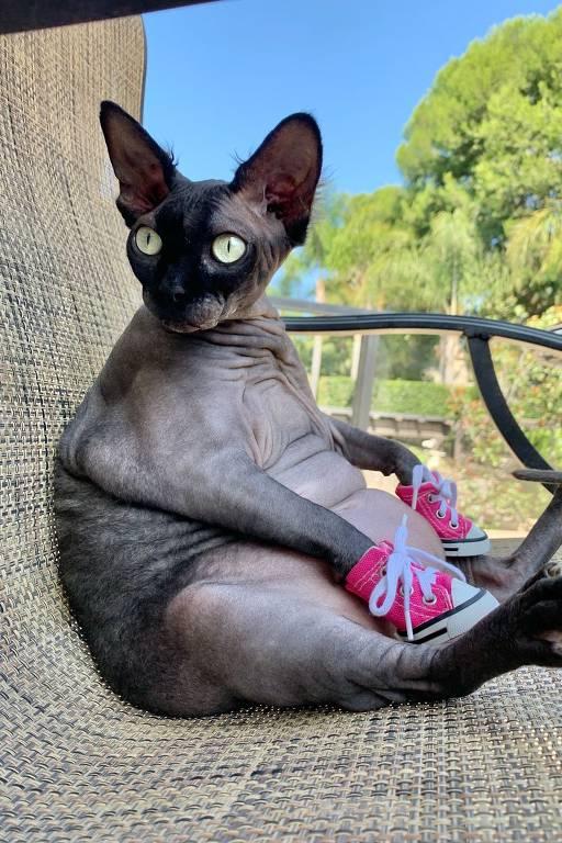 A gata sphynx LilyRose, que mora na Califórnia, nos EUA