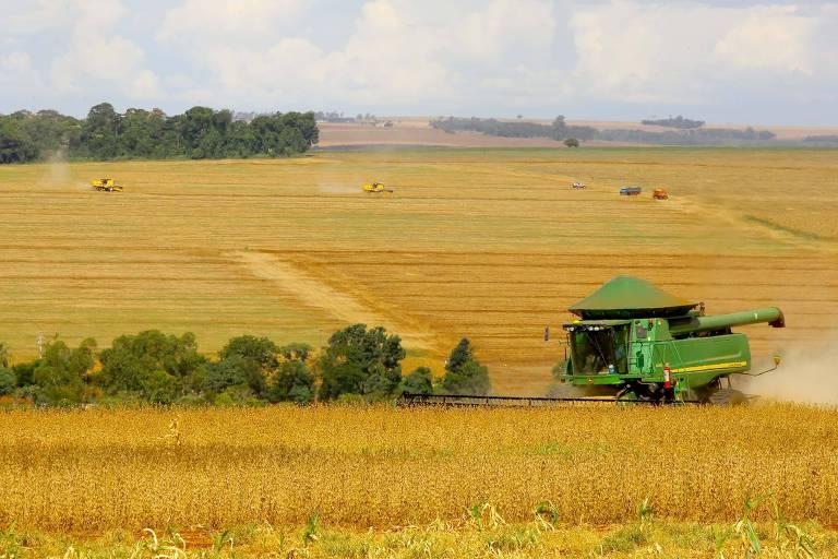 Argentina elimina limite diário de 30 mil toneladas para exportação de milho