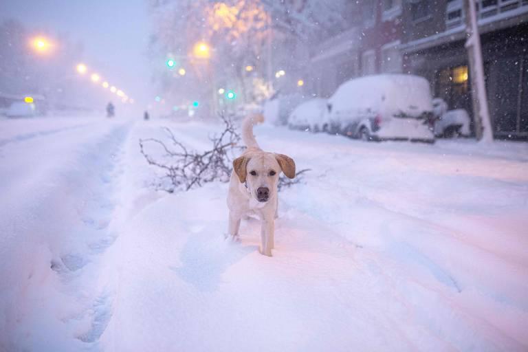 Pets pelo mundo em janeiro