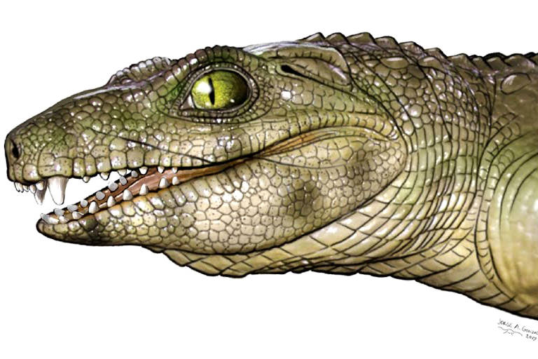 CROCODILOMORFOS