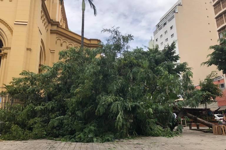 Árvore no chão com muitos galhos e folha em primeiro plano em frente a uma igreja amarela no largo de Santa Cecília