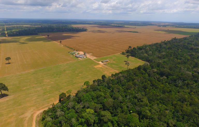 Plantação e floresta em Belterra, no Pará