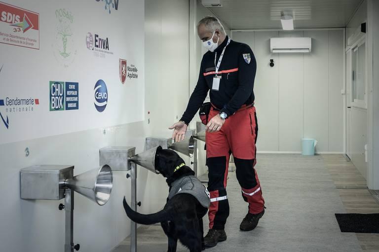 França usa cães para detectar coronavírus na transpiração humana