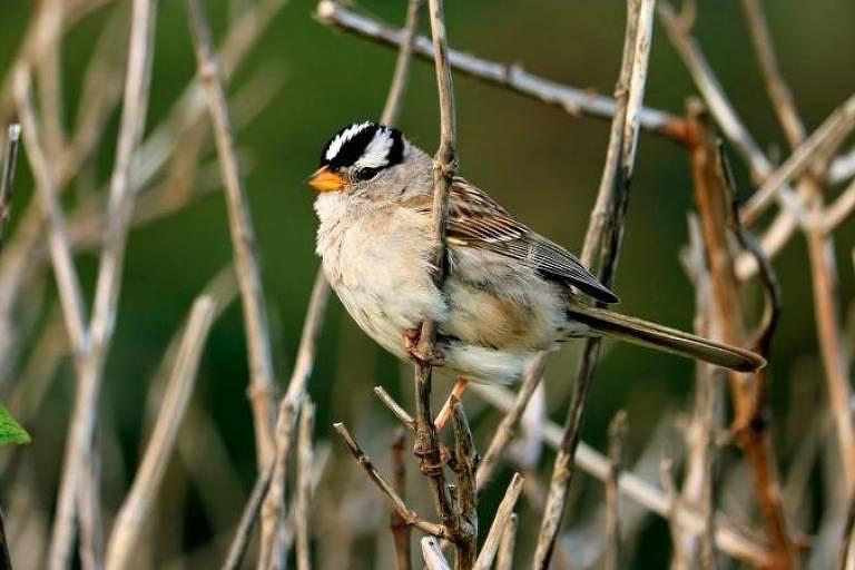 Barulho do trânsito afeta comportamento de pássaros e dificulta busca por comida