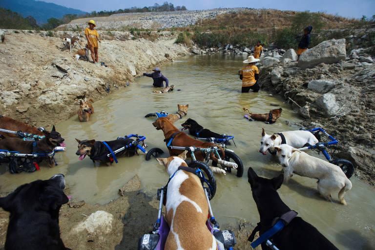 Cães em abrigo na Tailândia