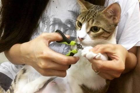 Cortar unha de gatos