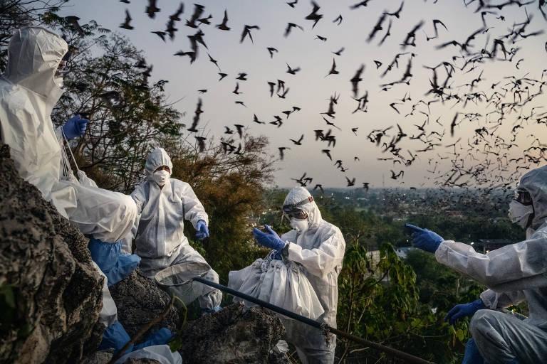 Equipe de cientistas coleta morcegos na Tailândia para estudar relação dos bichos com o coronavírus