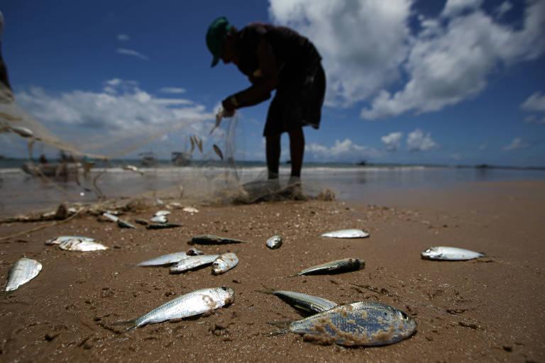 Em seis meses, Bahia registra 40 casos de doença causada por consumo de peixe contaminado