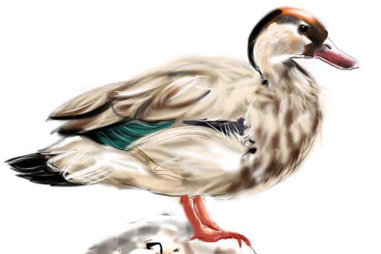 Conheça cinco lugares em SP para observar pássaros como flamingos, gaviões e pica-paus