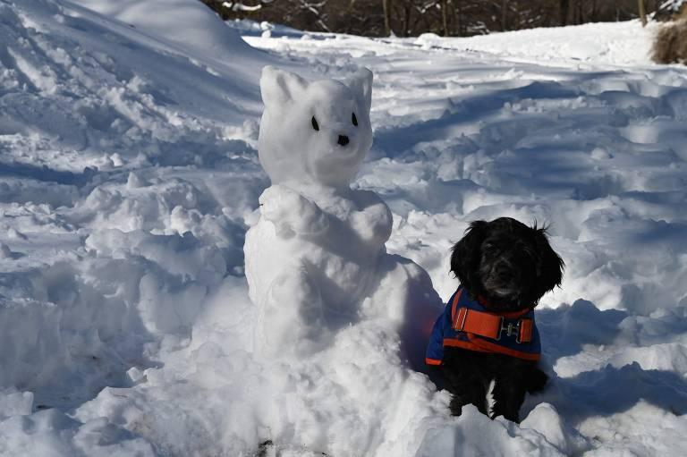 Pets pelo mundo - fevereiro