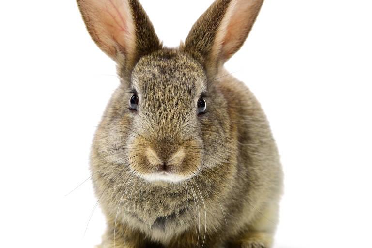 Por que coelhos são símbolos da Páscoa?