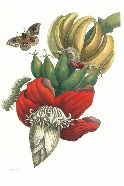 O amor de Maria Sibylla Merian pelos insetos