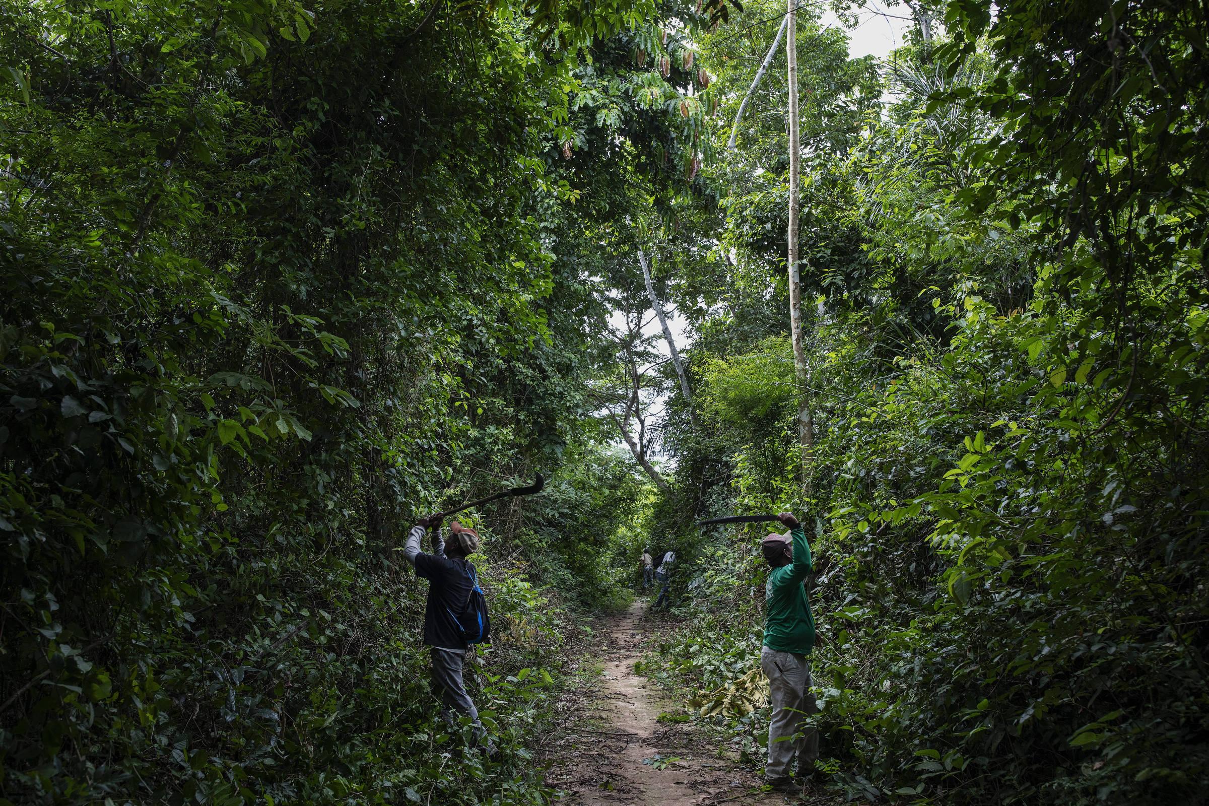 Moradores da comunidade quilombola de Pedras Negras, em Rondônia, preparam a trilha para escoar a coleta de castanha