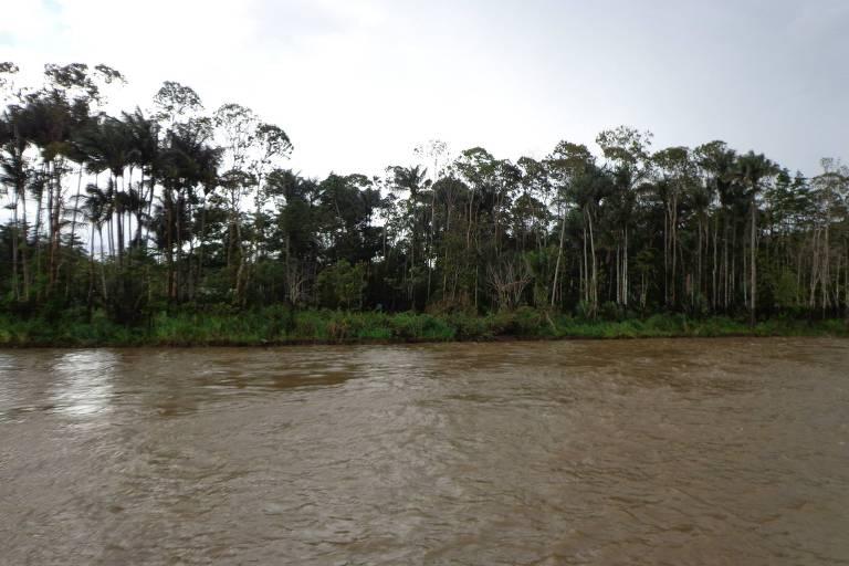 O grande catálogo de genes dos micróbios das águas amazônicas