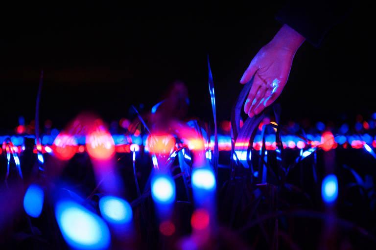 Grow é uma instalação de luz de 20.000 metros quadrados em um campo holandês. As luzes transformam as plantações em um espetáculo visual, mas também ajudam a melhorar o crescimento, isso e o resultado da combinação de tipos específicos de luz vermelha, azul e ultravioleta