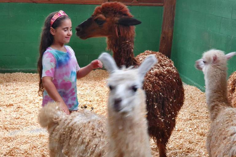 Criança interage com animais na Smart Farm, fazendinha com cerca 400 animais a 25 minutos de São Paulo
