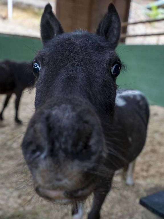 Smart Farm é uma minifazenda com cerca 400 animais domésticos a 25 minutos de São Paulo