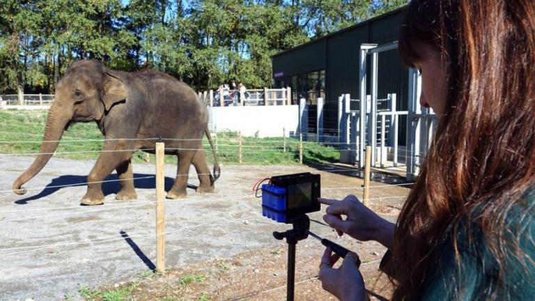 Zoo aposta em 'álbum' com 30 mil fotos para ajudar na preservação de elefantes