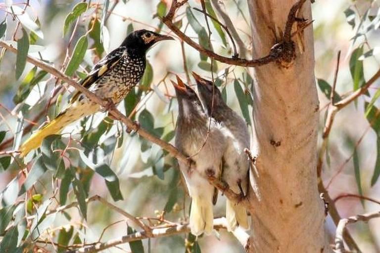 Os pássaros usam o canto para marcar território e encontrar uma companheira para acasalar