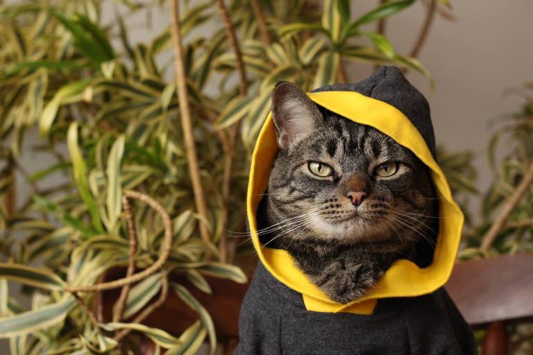 O gato Chico, 8, do perfil Cansei de ser Gato, tem mais de 560 mil seguidores no Instagram com posts divertidos e irônicos feitos por Amanda Nori, 33, administradora da página do Chico junto com Stefany Guimarães