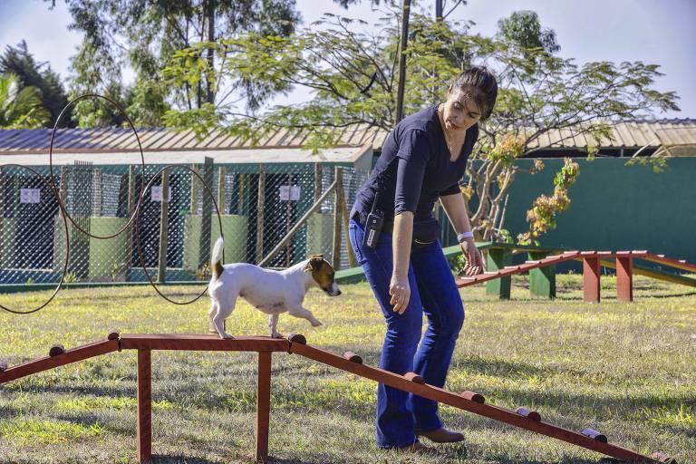 Mulher faz treinamento com cachorro