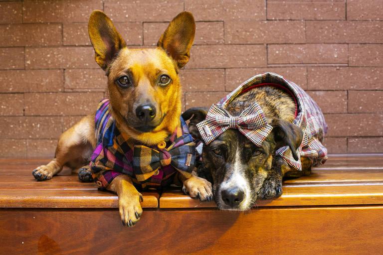 Cachorros vestem roupas da estilista Carol Vassilak, da grife Zampe