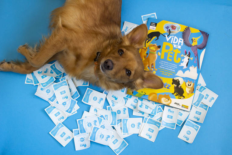 Livro colorido com figurinhas aberto sobre superfície com grama e chão azul. Há um cachorro amarelo deitado sobre as figurinhas