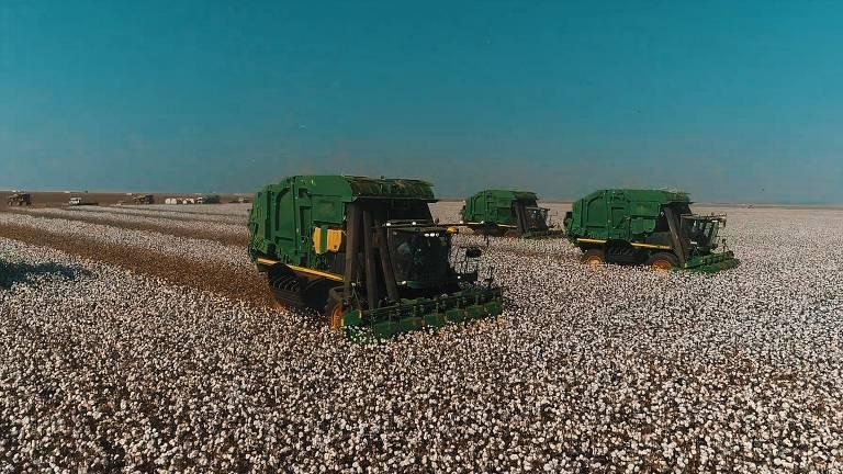 Algodão cultivado em Mato Grosso representa 69% da produção nacional