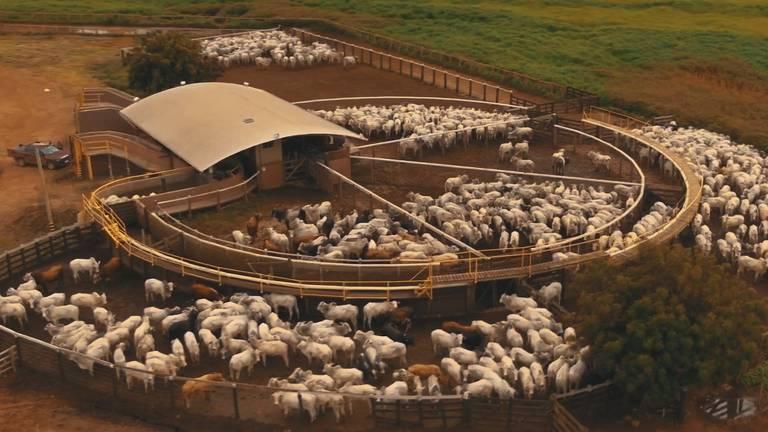 Estado de Mato Grosso é o maior produtor de bovinos do Brasil, com participação nacional de 14,8%