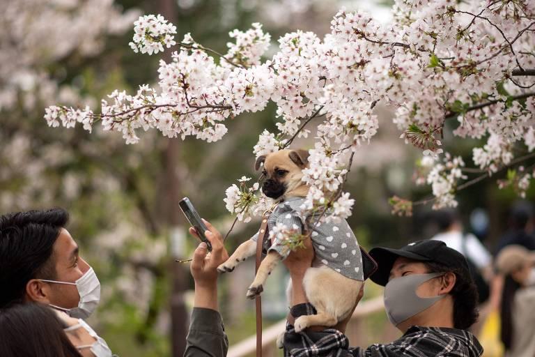 Pets pelo mundo - março