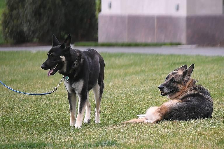 Conheça Major e Champ, cães de Biden