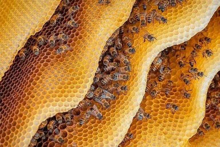 As abelhas espalham um remédio na colmeia, mas o composto também é usado na alimentação